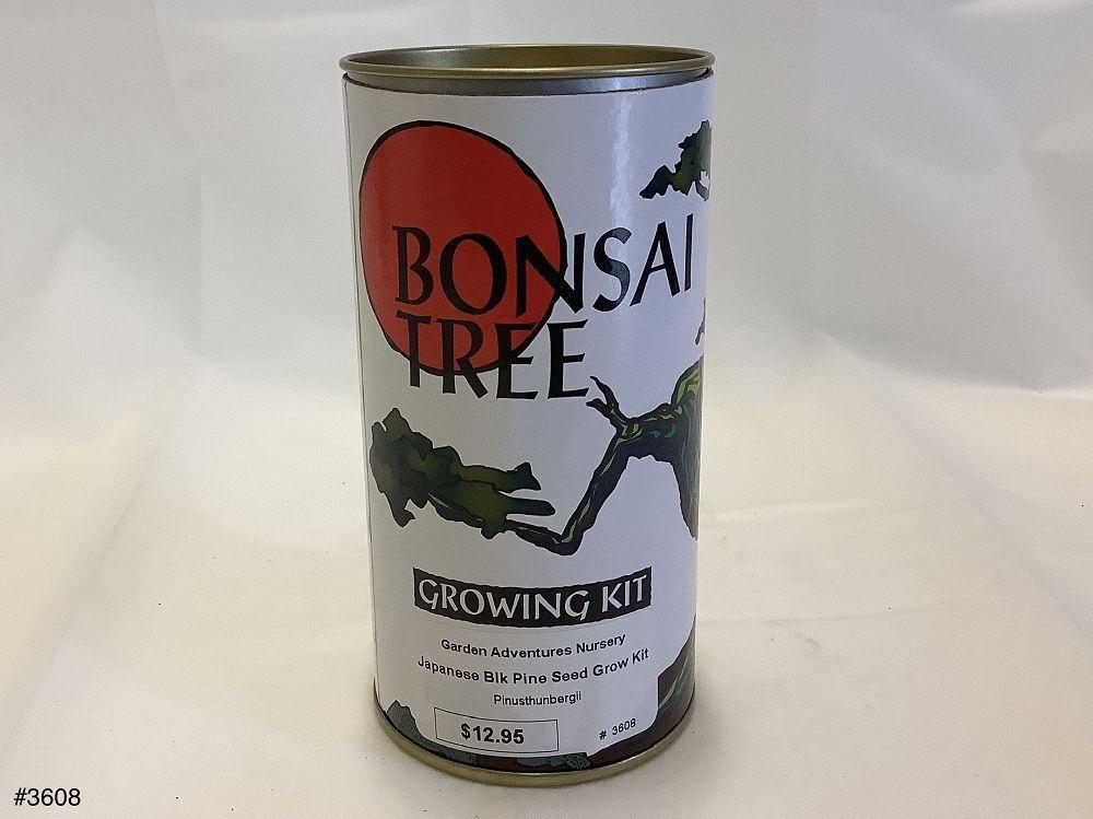 Japanese Blk Pine Seed Grow Kit